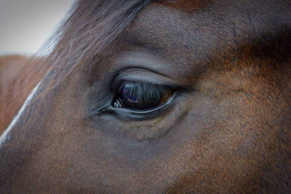 horse-1421530_1920.jpg