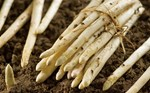 White Asparagus in May