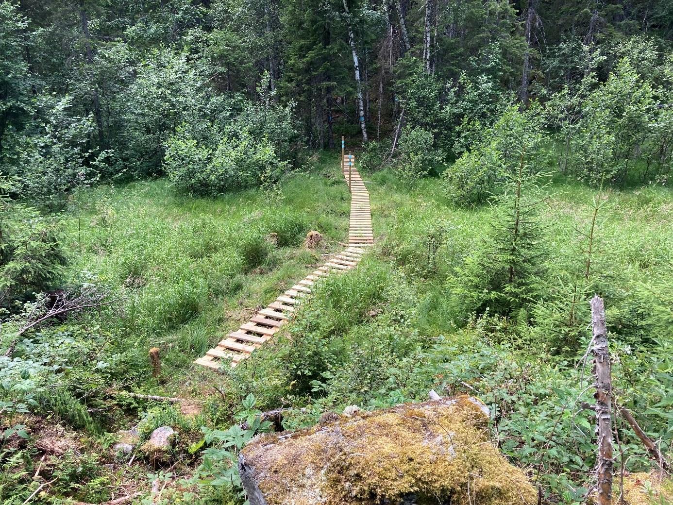 Et bilde som inneholder tre, utendørs, gress, skogAutomatisk generert beskrivelse