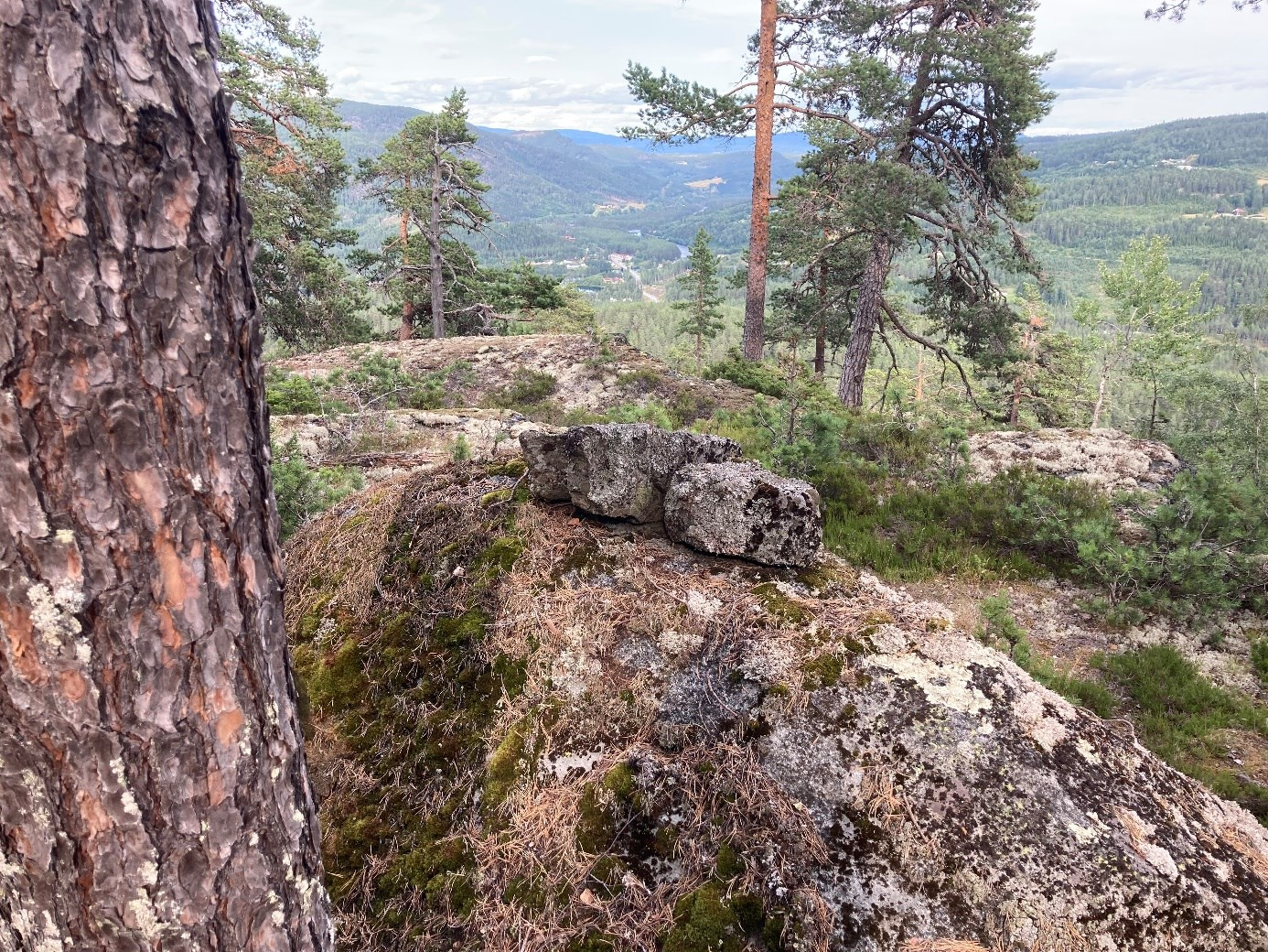 Et bilde som inneholder tre, stein, utendørs, fjellAutomatisk generert beskrivelse