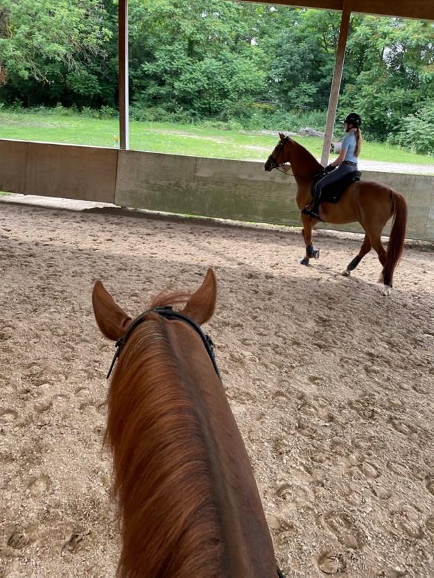Et bilde som inneholder hest, bakke, tre, utendørsAutomatisk generert beskrivelse