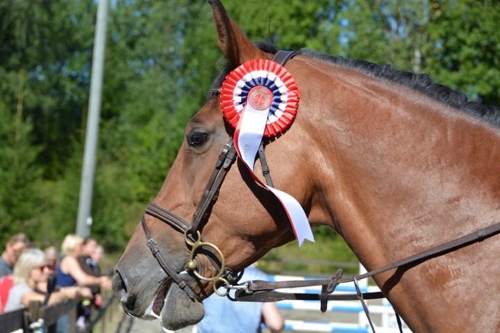 hestehode m rosett.jpg