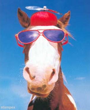 Bilderesultat for funny horse